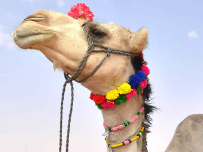 Bling Your Camel