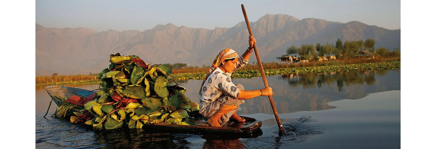 Removing Water Lilies from Dal Lake