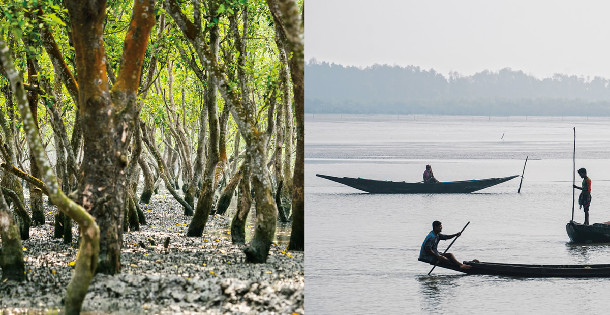 Forest of Tides: The Sundarbans