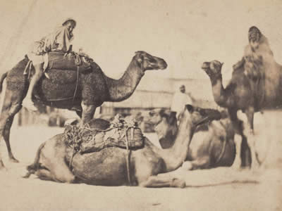 The Art of Saddling a Camel