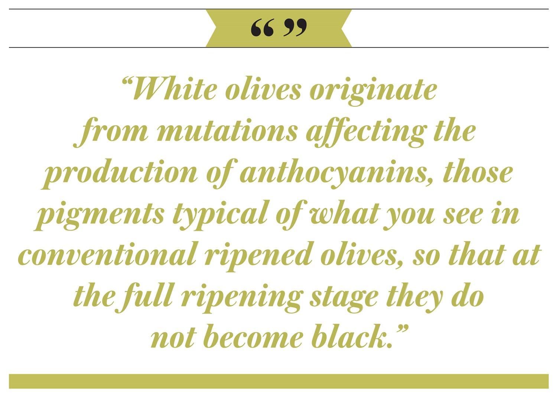 The White Olives of Malta - AramcoWorld