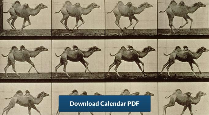 2019 gregorian hijri calendar camel